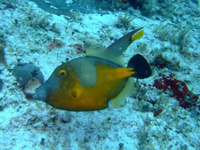 カリブ海の魚たち2♪          COZUMEL/MEXICO_e0184067_1152233.jpg