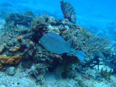 カリブ海の魚たち2♪          COZUMEL/MEXICO_e0184067_11522790.jpg