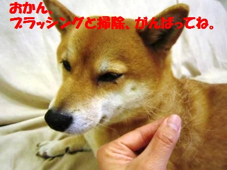 c0171368_21361082.jpg