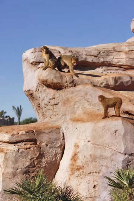 動物園の動物写真、お蔵出し^^ヾ_e0092286_1625623.jpg