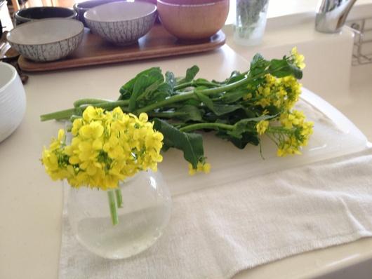 菜の花満開_c0093301_19342715.jpg