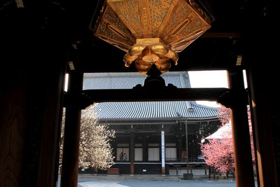 興正寺の紅白梅_e0048413_22414463.jpg