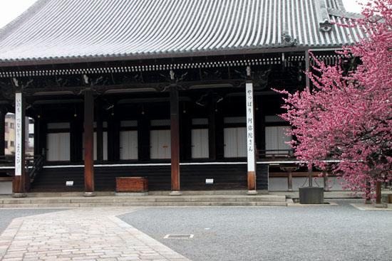 興正寺の紅白梅_e0048413_224273.jpg