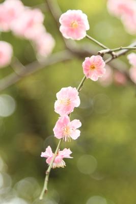春来る・・・かな_a0165018_1137432.jpg