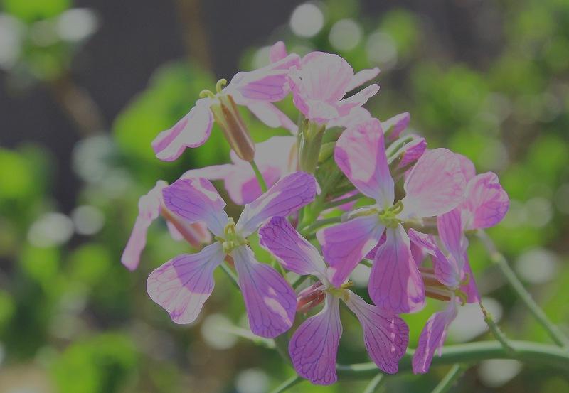 ハイタカ 「春の渡り」_d0074828_20283430.jpg