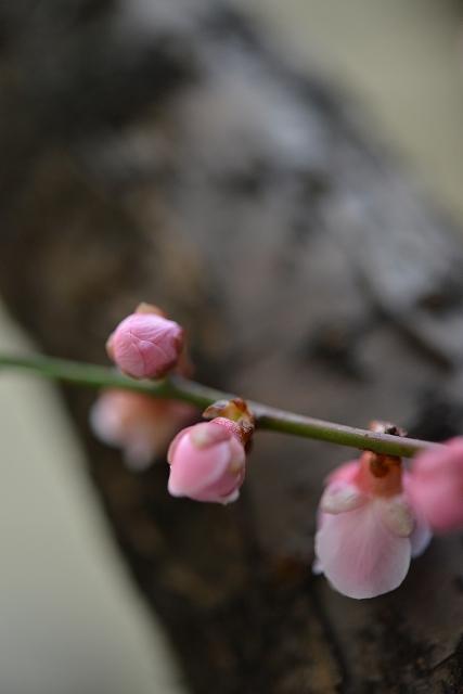 梅の香り_f0050534_9465730.jpg