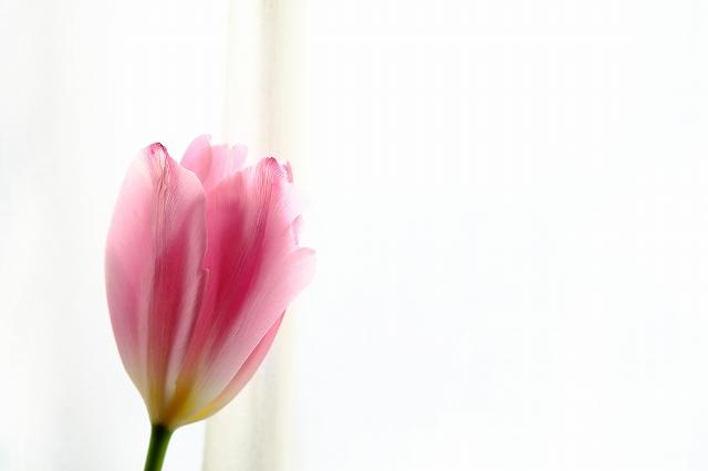 窓辺の春_f0050534_9522596.jpg