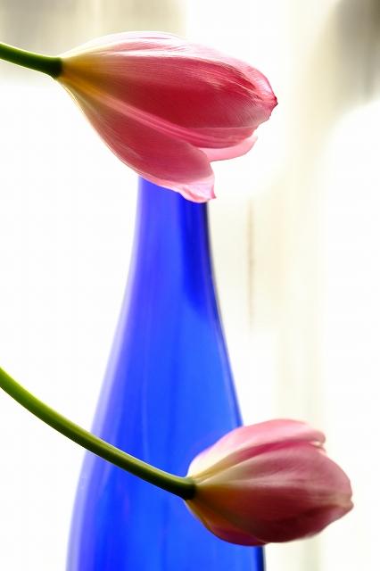 窓辺の春_f0050534_9523782.jpg