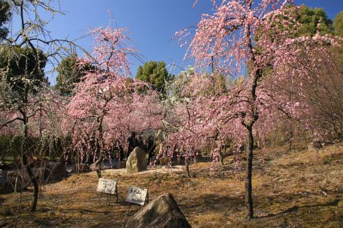 城南宮の梅と椿 雅の世界  京都_d0055236_18344144.jpg