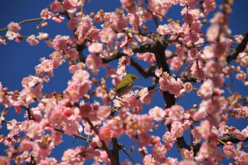 城南宮の梅と椿 雅の世界  京都_d0055236_183537.jpg