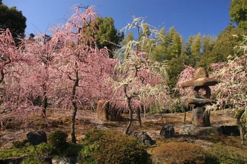 城南宮の梅と椿 雅の世界  京都_d0055236_18362268.jpg