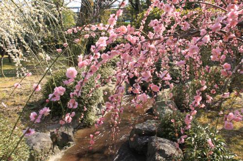 城南宮の梅と椿 雅の世界  京都_d0055236_18363590.jpg
