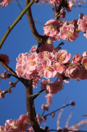 城南宮の梅と椿 雅の世界  京都_d0055236_1837115.jpg