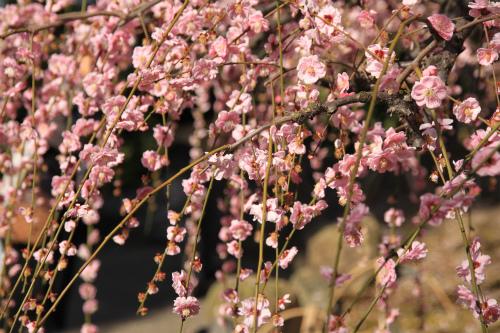 城南宮の梅と椿 雅の世界  京都_d0055236_1837147.jpg