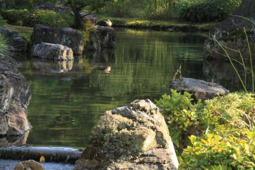 城南宮の梅と椿 雅の世界  京都_d0055236_18383859.jpg