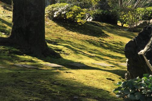 城南宮の梅と椿 雅の世界  京都_d0055236_18391048.jpg