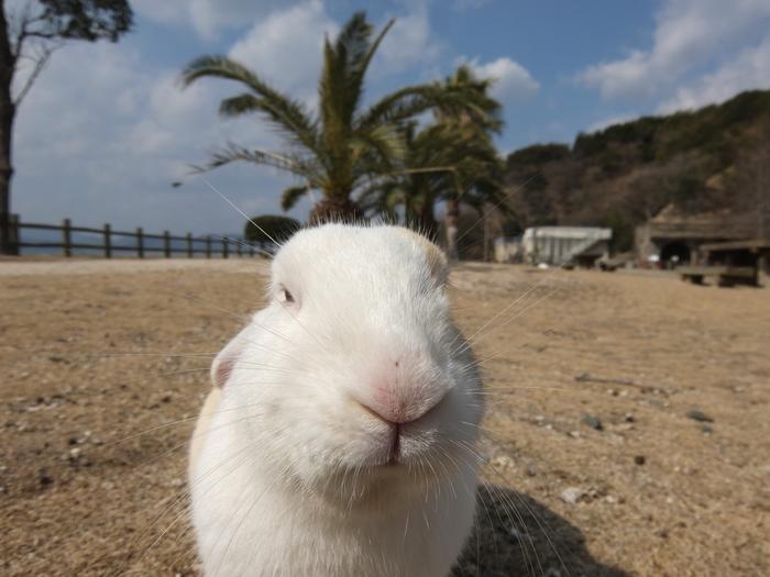 大久野島の画像 p1_22
