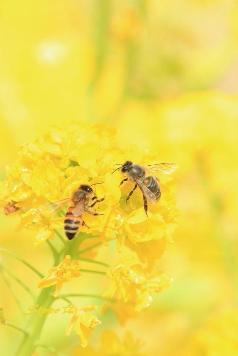 ■■ 春一番の働き者 ~ミツバチ~ 2 ■■_c0195662_22174592.jpg
