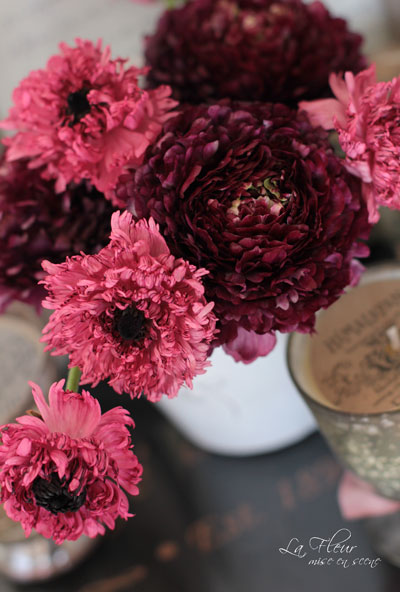 モロッコ咲きのラナンキュラスとピュイド_f0127281_23394819.jpg