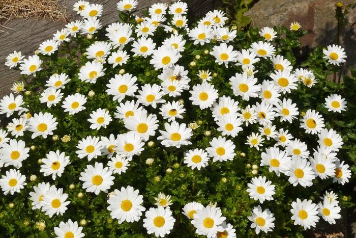 浜名湖ガーデンパーク 4_b0093088_1615269.jpg