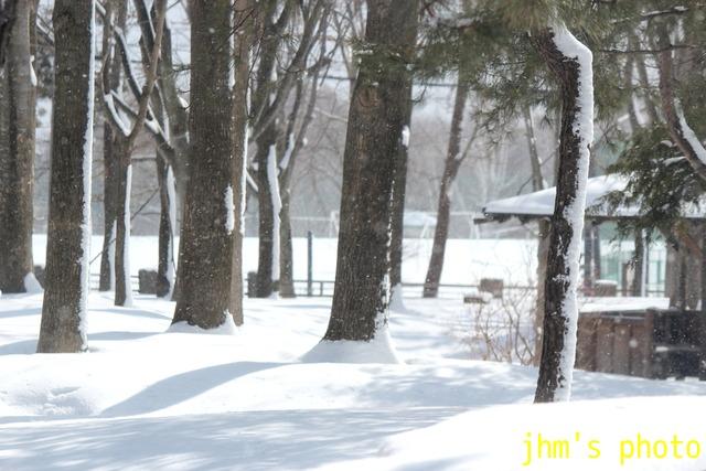 函館はまだ冬です写真_a0158797_23582928.jpg