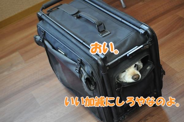 b0067012_110492.jpg