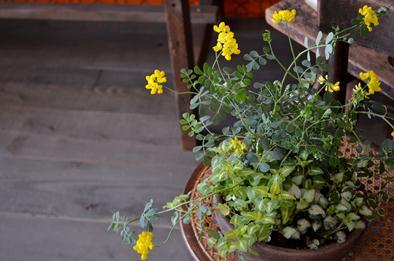 新しい植物と実験器具たち_d0263815_18281591.jpg