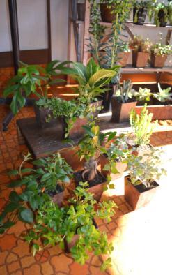新しい植物と実験器具たち_d0263815_1830833.jpg