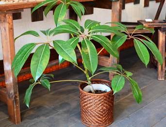 新しい植物と実験器具たち_d0263815_18382364.jpg