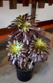 新しい植物と実験器具たち_d0263815_19255912.jpg