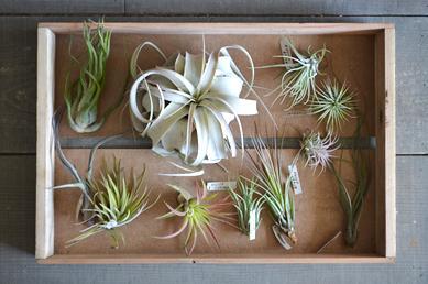 新しい植物と実験器具たち_d0263815_19304959.jpg