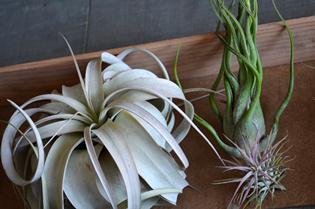 新しい植物と実験器具たち_d0263815_19312247.jpg