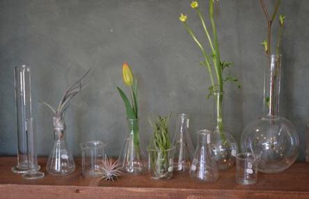 新しい植物と実験器具たち_d0263815_19421327.jpg