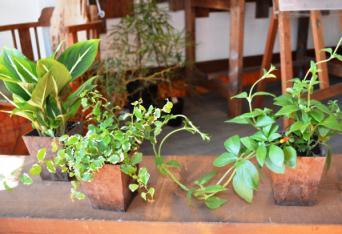 新しい植物と実験器具たち_d0263815_19473526.jpg