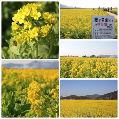 花便りが気にかかる季節になりましたね。_f0167415_141358100.jpg