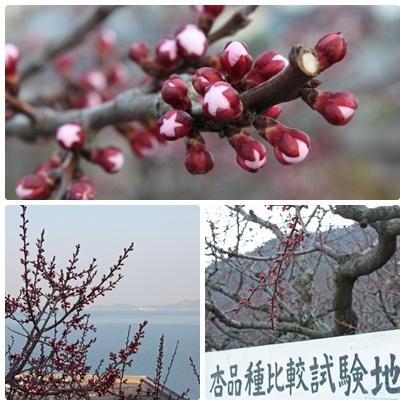 花便りが気にかかる季節になりましたね。_f0167415_1416516.jpg