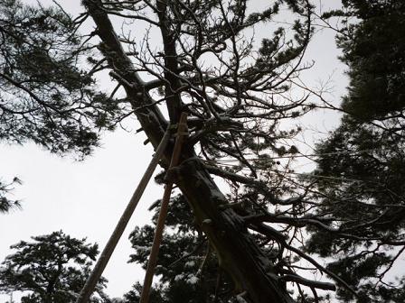 この樹なんの樹気になる樹・第2段_e0135219_1248735.jpg