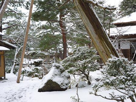 この樹なんの樹気になる樹・第2段_e0135219_12502949.jpg