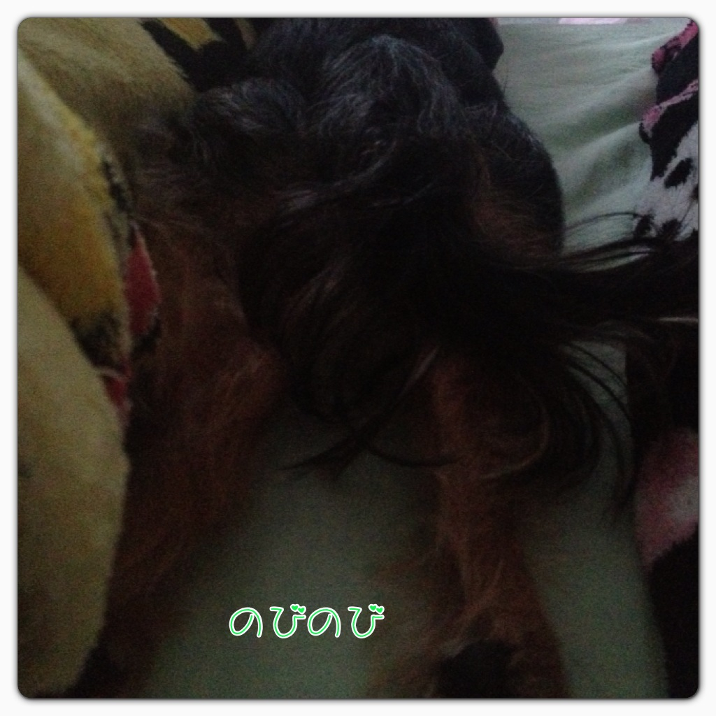 e0309644_125251.jpg