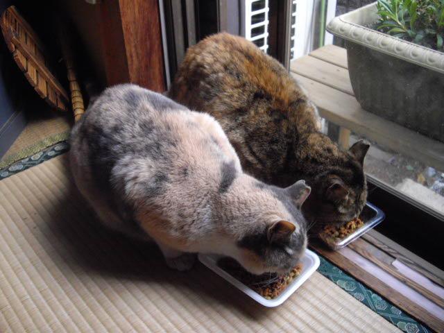 猫達は仲良し・・・_d0116059_1442385.jpg