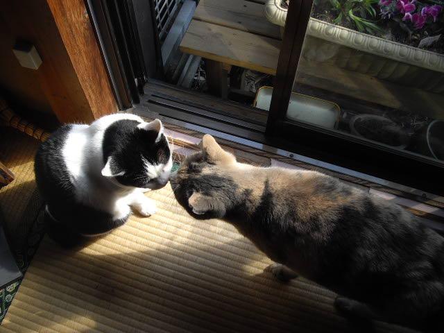 猫達は仲良し・・・_d0116059_14432182.jpg