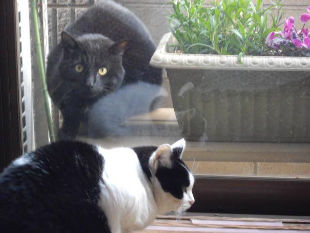 猫達は仲良し・・・_d0116059_1445221.jpg
