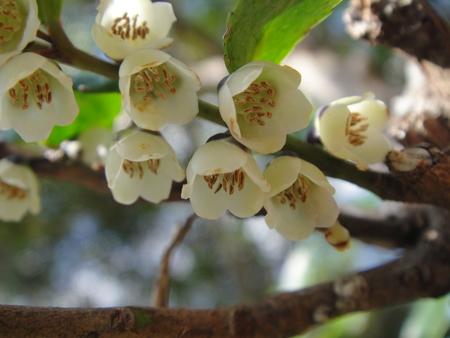 ビシャコの花がきれい! うみべの森植物観察_c0108460_17552335.jpg