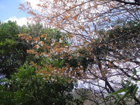 ビシャコの花がきれい! うみべの森植物観察_c0108460_1852389.jpg