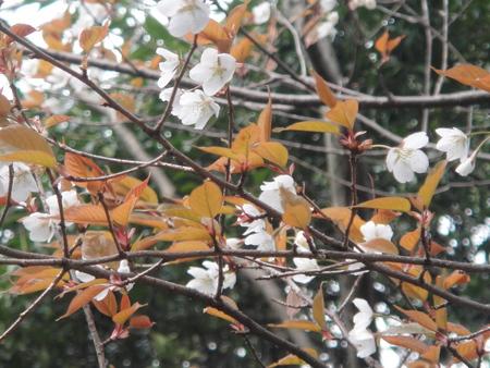 ビシャコの花がきれい! うみべの森植物観察_c0108460_1854921.jpg