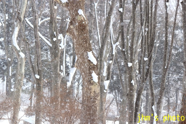 函館はまだ冬です写真_a0158797_052764.jpg