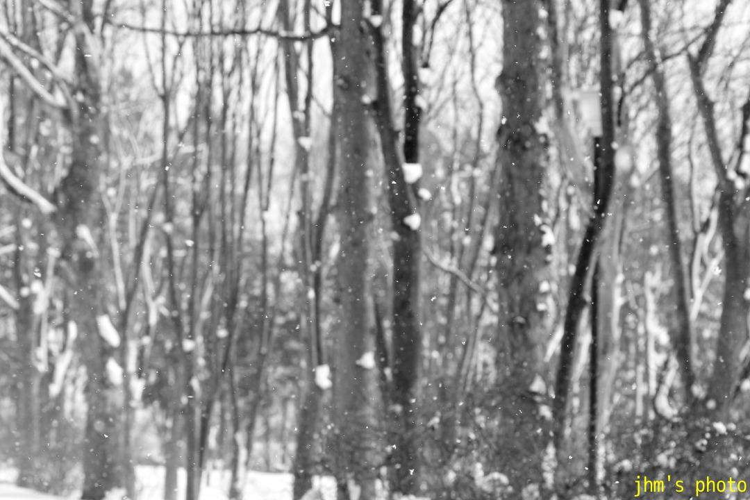函館はまだ冬です写真_a0158797_093784.jpg