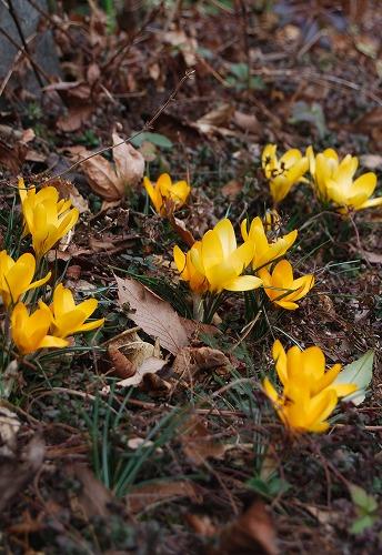 野鳥が黄色を好きなワケ_c0124100_23463878.jpg