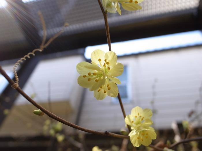 春の訪れとともに・・・・_f0223603_15128100.jpg