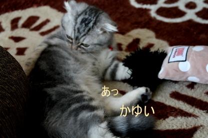炸裂猫キック!_c0178104_15562468.jpg